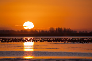 Vogel am Lauwersmeer